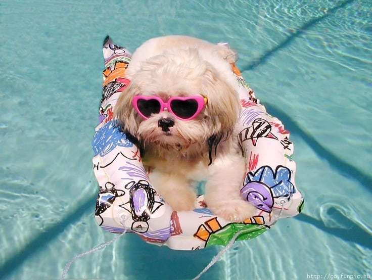 doggy in pools